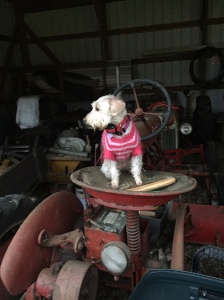 Mayberry on a tractor
